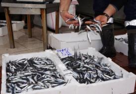 """Hamsi sezonu bitti balıkçı tekneleri """"paydos"""" etti"""