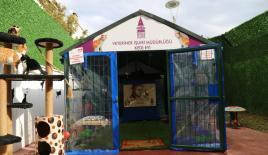 Harun Kolçak anısına kedi evi yaptırıldı