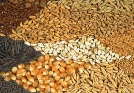 Tohum ithalatında gümrük vergisi değişikliği