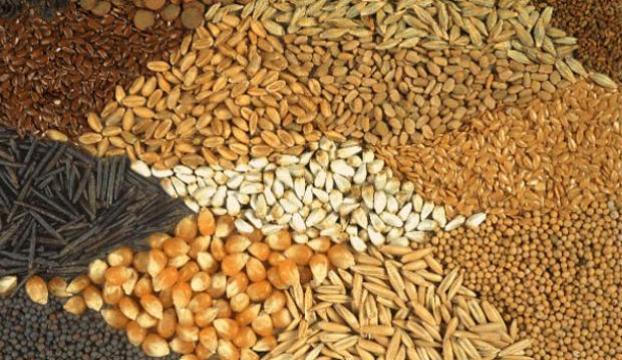 Hollanda da yapılan tohum analizleri artık Antalyada yapılıyor