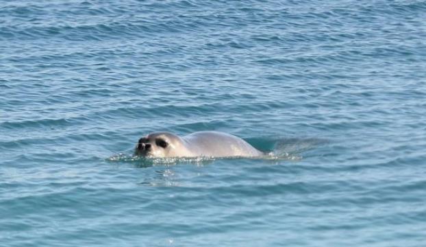 """""""İklim değişikliği Akdenizdeki canlı türlerini tehdit ediyor"""""""