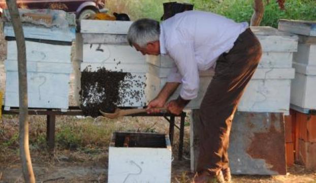 Guatr hastalığına sebep olan iyot eksikliği, arılarda balı azaltıyor