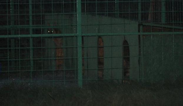 İstanbulda köpek dehşeti