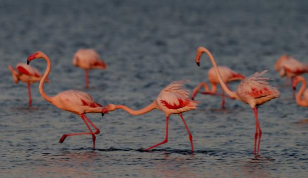 Göller Yöresinde 739 bin 142 su kuşu sayıldı