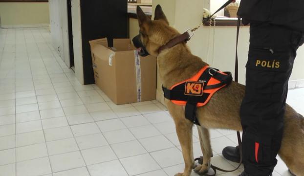 K9 köpekleri sınavda