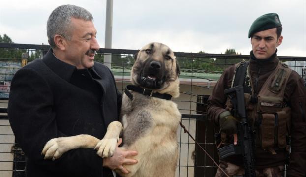 """Emniyette yabancı köpekler yerine """"yerli köpekler"""""""