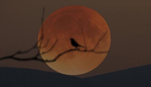 """Yüzyılın en uzun """"Kanlı Ay"""" tutulması cuma günü yaşanacak"""