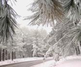 Ülke de kar manzaraları