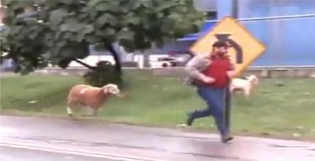 Kızgın keçi terör estirdi!