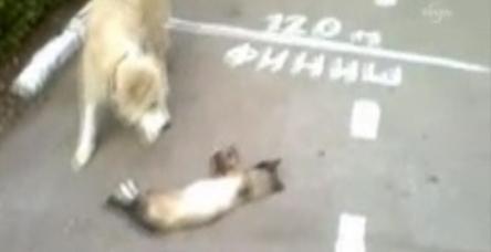 testKedinin köpeğe ölü numarası tuttu
