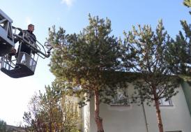 Ağaçta mahsur kalan kedinin yardımına itfaiye koştu