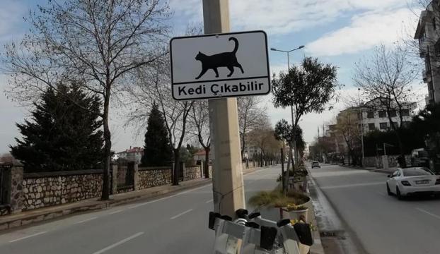 Sürücülere Kedi Çıkabilir levhalarıyla uyarı