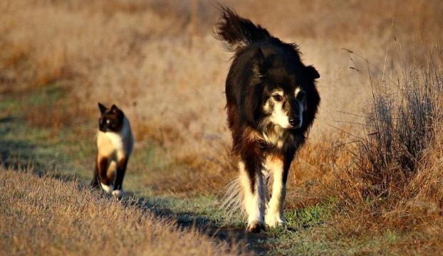 İstanbulda 255 bin civarında sahipsiz kedi-köpek yaşıyor