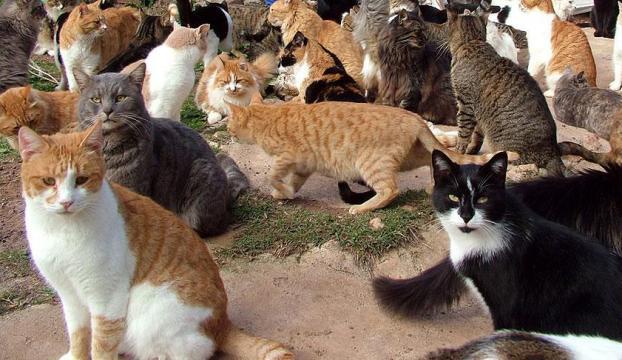 Yüzlerce kediye kuş gribi karantinası