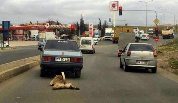 Otomobilin arkasına bağladığı köpeği sürükledi