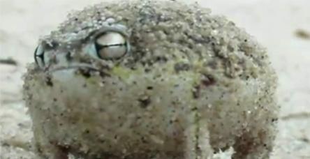 testKedi yavrusu sesli kurbağa