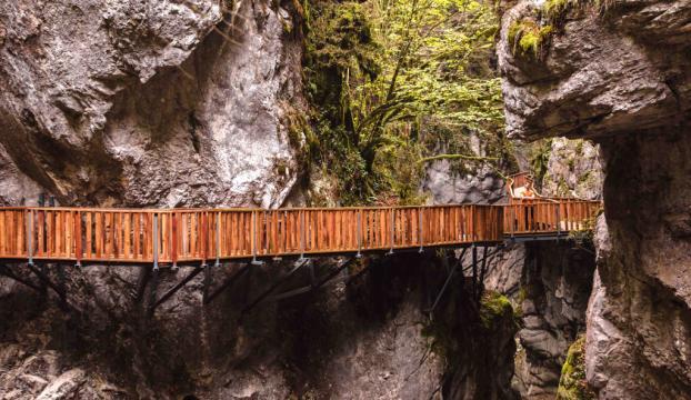 Küre Dağları Milli Parkına Yeni Sertifika