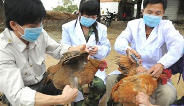 Çinde kuş gribi