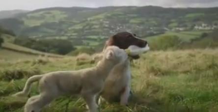 testKöpek kuzu dostluğu