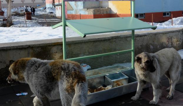 Sokak hayvanları için mama istasyonu