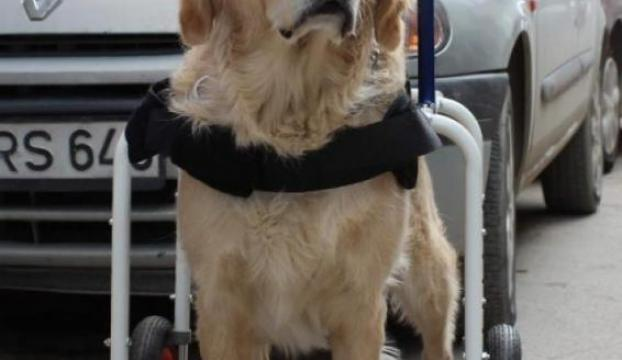 Köpeğe yürüteç, martıya protez