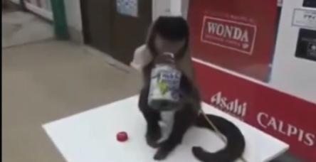 Maymunun şaşırtan zekası