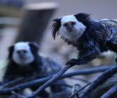 Bursa Hayvanat Bahçesinde doğum mutluluğu