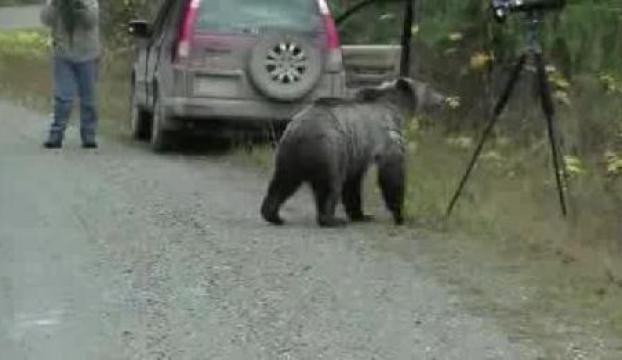 Meraklı ayı