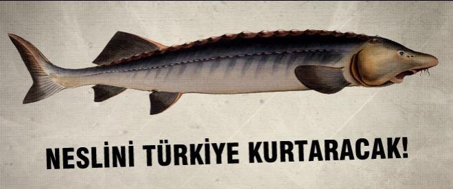 Artık Türkiye'de üretiliyor