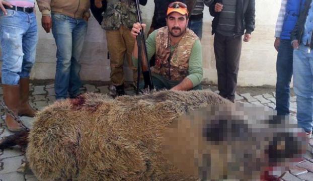 Çal canavarını vurdular!