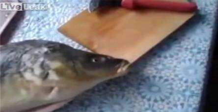 testŞarkı söyleyen ölü balık!