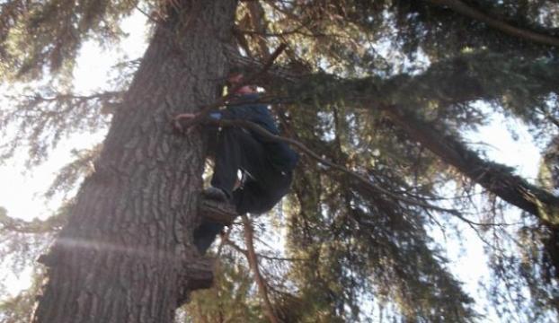 Ağaca çıkıp intihar etmeye kalktı
