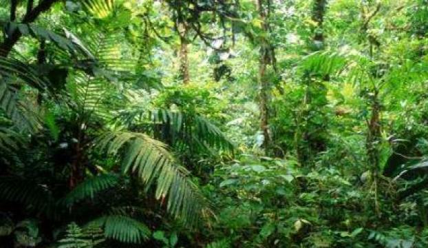Orman köylülerine 2,2 milyon lira destek