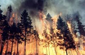 İspanya'da orman yangını 2 can aldı