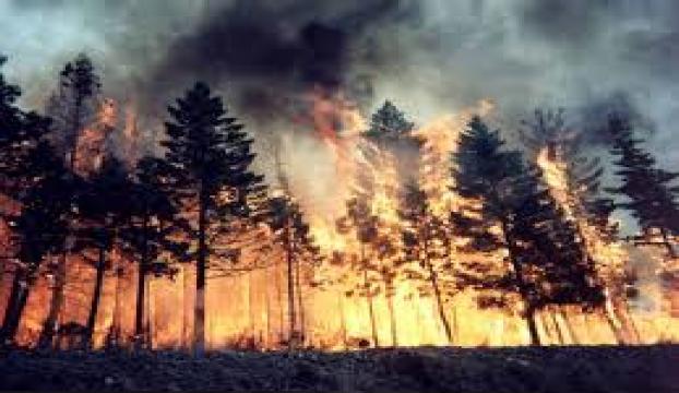 İskenderunda orman yangını