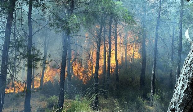 Adrasanda orman yangını çıktı