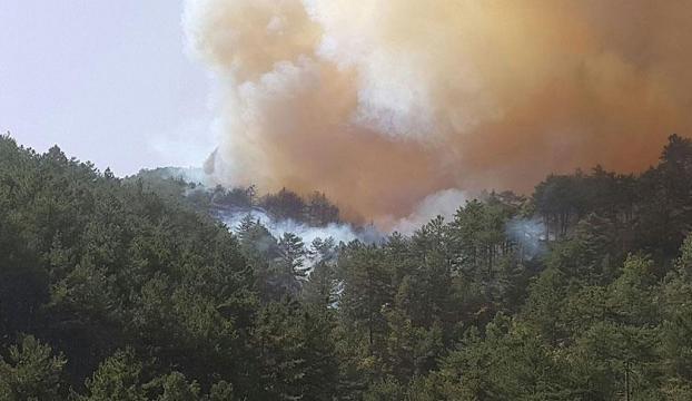 Kütahyada ikinci orman yangını