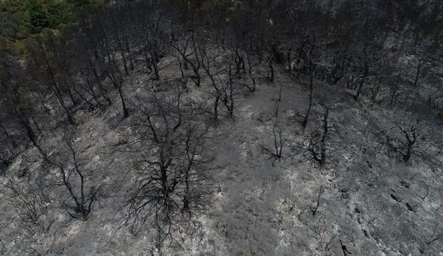 İzmirdeki orman yangınının nedeni araştırılıyor