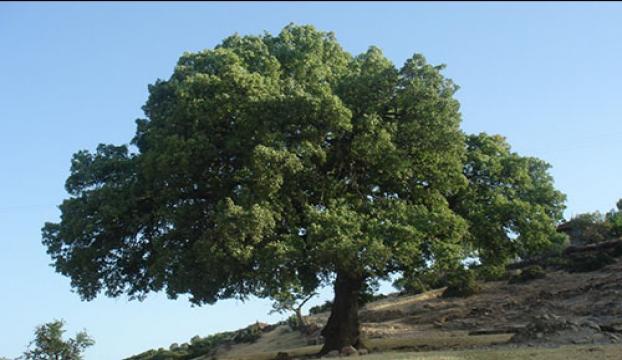 Bağcılarda 174 bin 420 ağaç kesilmekten kurtarıldı