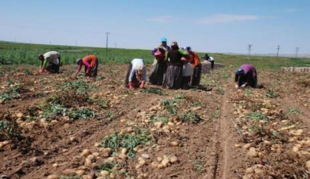 Çiftçinin faizinin yarısını devletten!