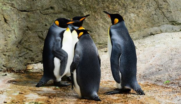 Antartikada 1,5 milyonluk yeni penguen sürüsü keşfedildi