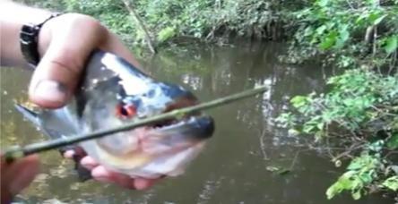 testParmak kopartan balık bu olsa gerek!