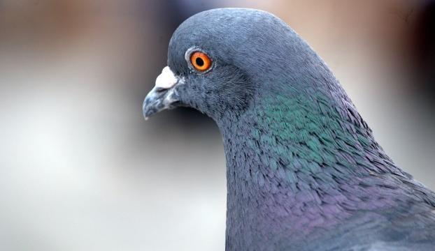 """""""Posta güvercini kaldı mı?"""" demeyin!"""