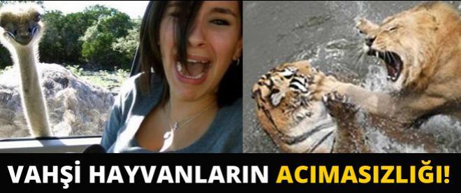 Vahşi hayvanların acımasızlığı!