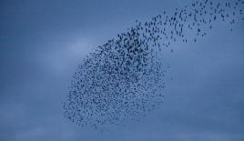 Atatürk Havalimanı'nda kuş sürüsü önlemi