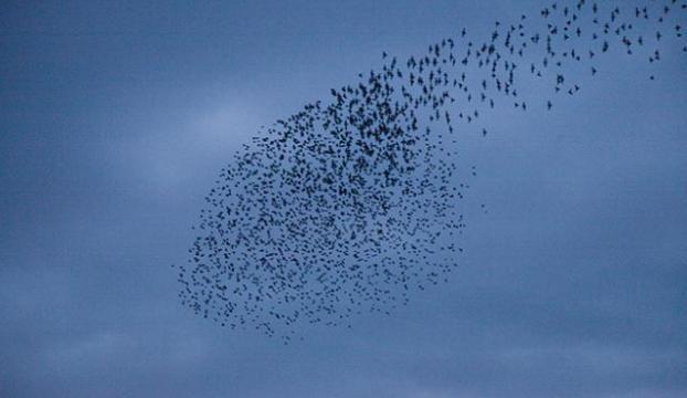 Atatürk Havalimanında kuş sürüsü önlemi
