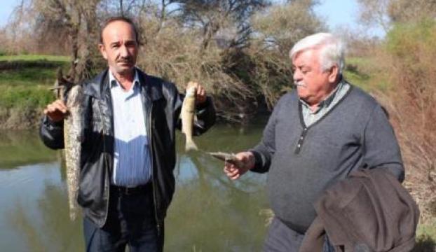 Simav çayında toplu balık ölümleri korkutuyor