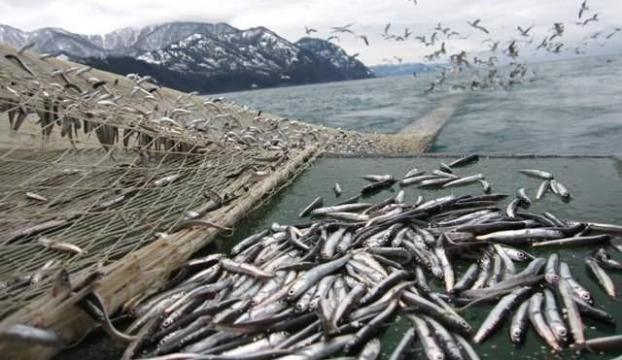 """Karadenizde balıkçılar ağları """"hamsi"""" için onarıyor"""