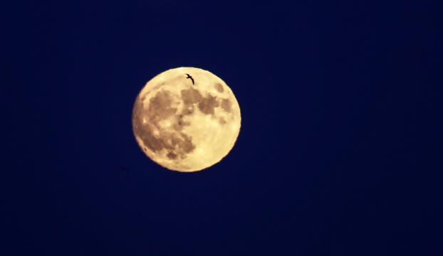 Ayın oluşumuna dair yeni teori