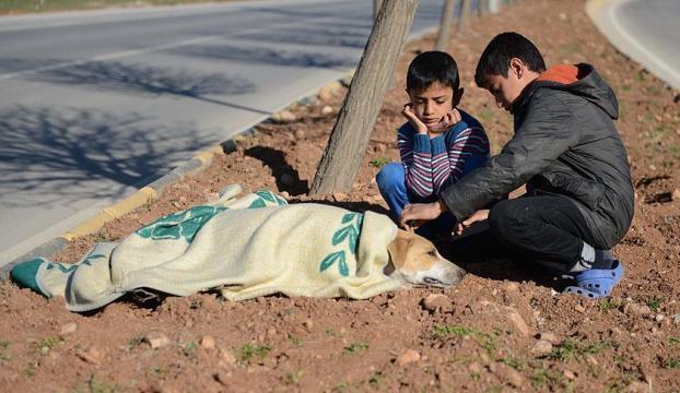 Suriyeli çocuk yaralı köpeğin başından ayrılmadı